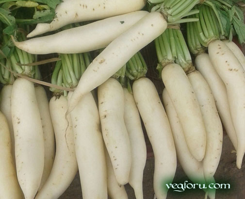 Health Benefits of Radishes: Muli | ayurvedatips