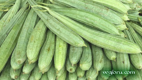Click The Picture And See Turai Vegetable In English