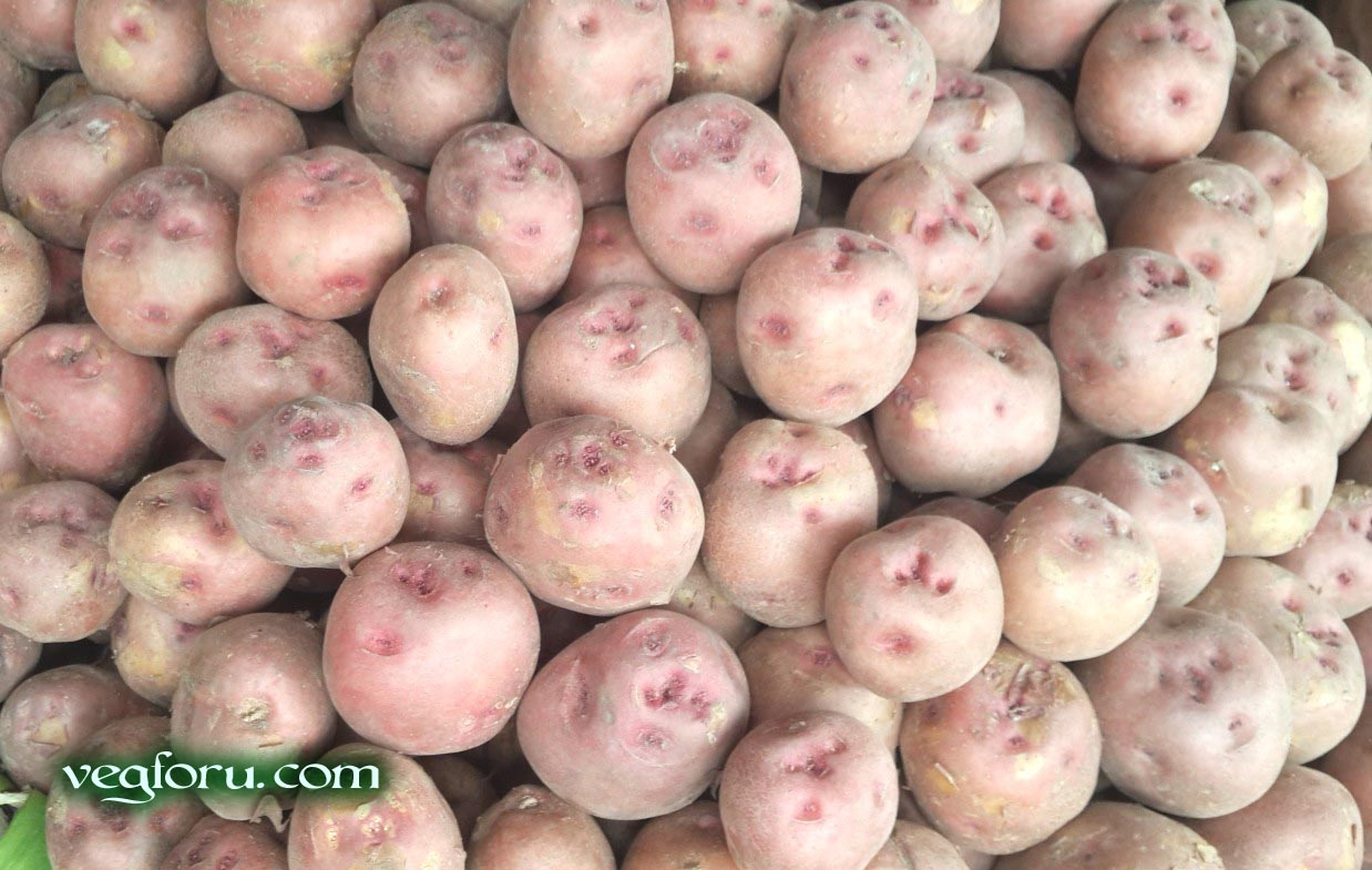 Red Potato vegetable known as Lal Aloo